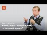 Плазматическая мембрана - Евгений Шеваль