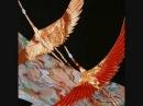 尺八 本曲 shakuhachi Zen music  西園流  鶴の巣籠  Tsuruno-sugomori Seien-ryu
