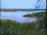 Серия фильмов о природе - Дельта Волги