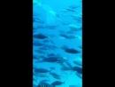на глубине 25 метров,Красное море)Египет 2014