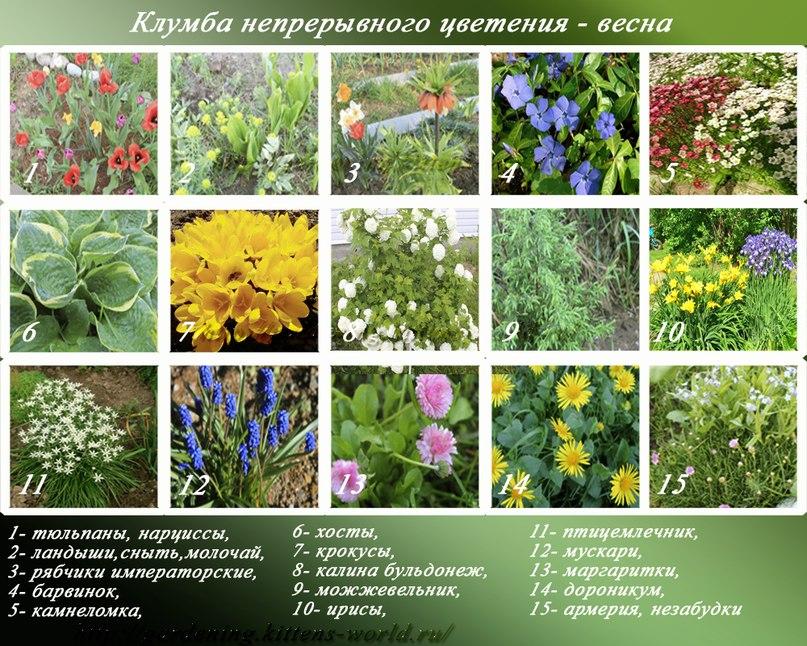 Клумба непрерывного цветения-весна