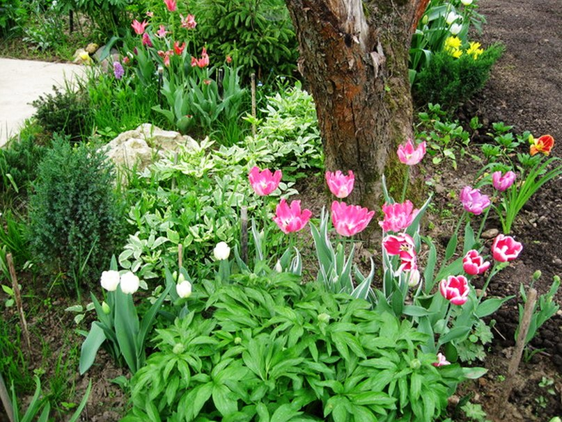 Некоторые из растений описанных выше