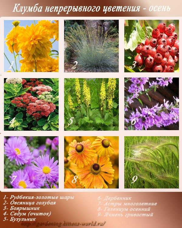Клумба непрерывного цветения-осень