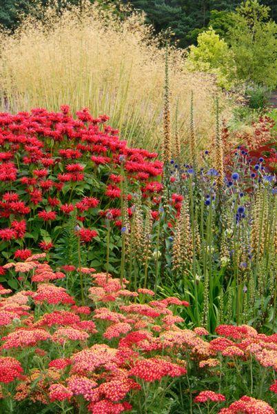 Клумба непрерывного цветения-примеры