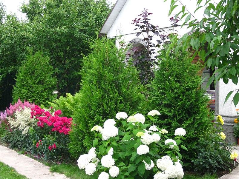 Клумба непрерывного цветения,розы-туи-гортензия-флоксы-астильбы-папоротник