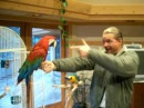 Greenwing macaw gets shot