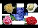Презентация для детей Цветы Карточки Домана Развивалки