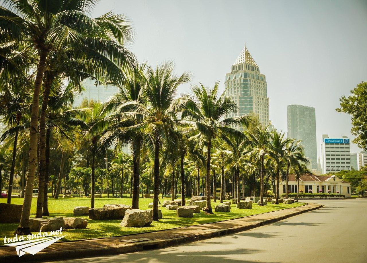 Пальмы Бангкок