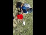 змееголов Балхаш