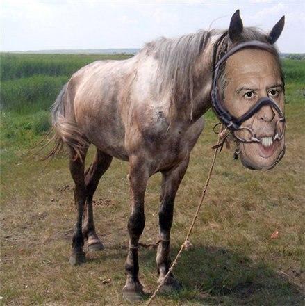 Под Киевом задержали охотника, который застрелил племенную лошадь стоимостью более 50 тыс. евро - Цензор.НЕТ 2948