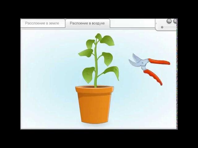 Размножение растений отводками