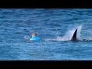 Акула против серфингиста Мик Фэннинг победил