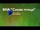 Клён - Солист ВИА Синяя птица - Александр Дроздов