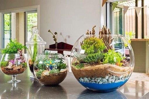 Фото растения в вазе