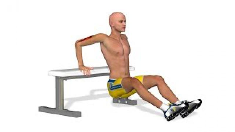 Как увеличить силу рук: Tricep bench dips