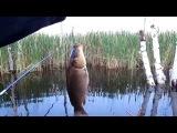 Обучающее видео для начинающих рыбаков, как ловить на хлеб, на прищип