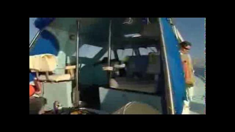 BBC: 10 самых опасных акул 2 часть