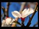 Феликс Словачек Маленький цветок