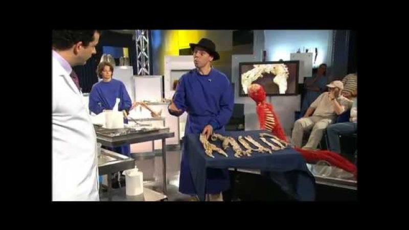 Анатомия. Круговорот жизни и смерти. Впечатлительным не смотреть