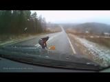 Автодоброта. Животные на дороге