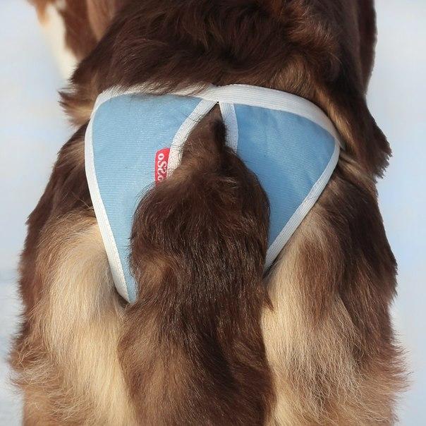 OSSO Fashion - лучшие товары для животных,дрессировки,спорта HI9JUSVGR_Q