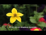 Мария Лукач - Твоя Любовь