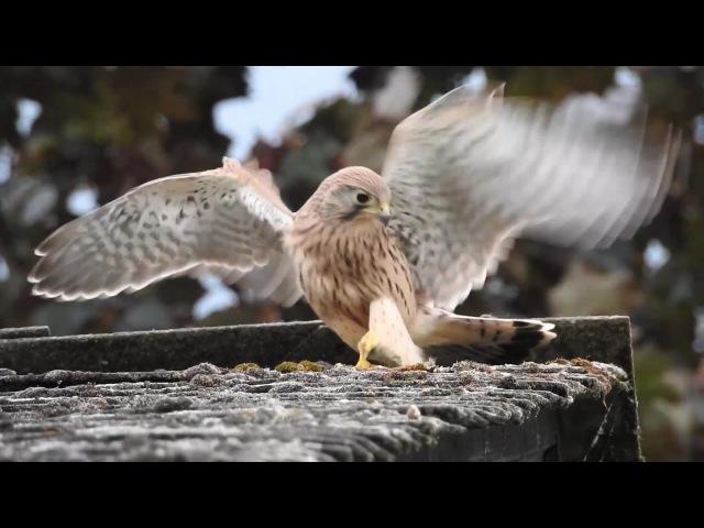 Nikon coolpix P900 - Videos of birds © Lothar Lenz