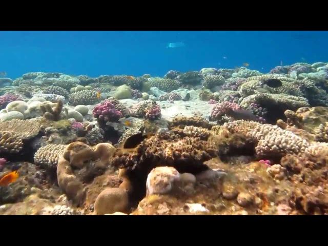 Egypt, Sharm el Sheikh, GRAND ROTANA ResortSPA - UNDERWATER