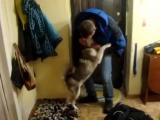 Встреча собаки с хозяином после долгой разлуки))