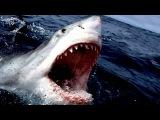 Самые опасные животные в мире. Топ 10