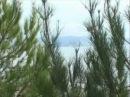 Объединение пансионатов «Курорт Пицунда» Абхазия