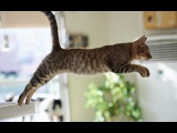 Funny Cats Jump Fail - Part 1