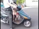 Собака жжет)