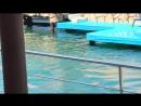 выступление в дельфинарии белухи