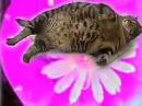 Fat Stoner Cat