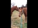 Лошадь это самое умное животное, смотрите вы будете в шоке