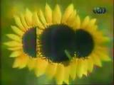 staroetv.su / Заставки (ТНТ, 1998-2000)