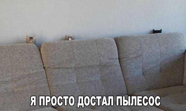 http://cs622028.vk.me/v622028477/538c0/xgR1XF7_iG4.jpg