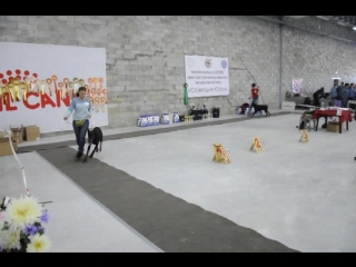доберман 6 Монопородная выставка собак ранга ПК (02.05.2015) г. Сургут