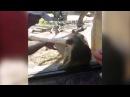 Прикол) уморительная реакция обезьяны на фокус