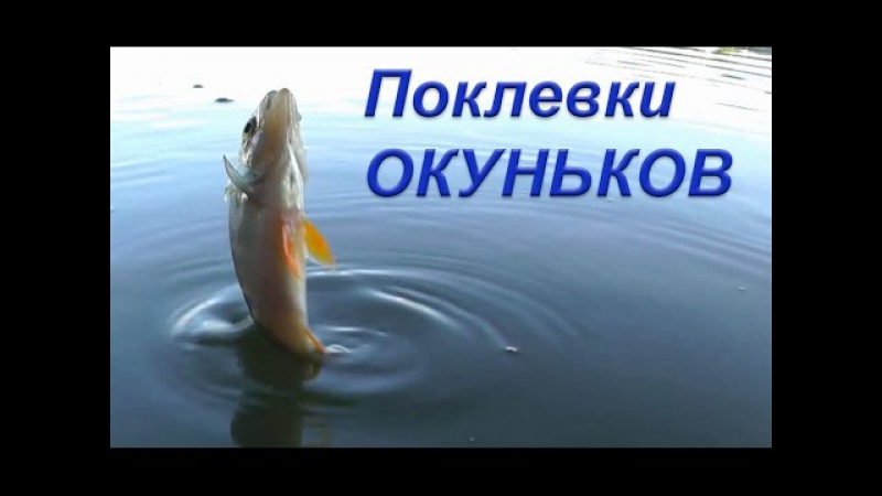 Ловля ОКУНЬКОВ на червя поплавочной удочкой. Рыбалка. Fishing. Ловля на поплавок