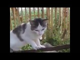 Кот-незнайка)