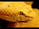 Красота змей HD