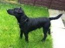 Patterdale Terrier Dog Puppies information Video - Animal Videos