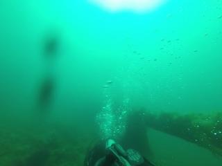 Дайвинг в Черном море.