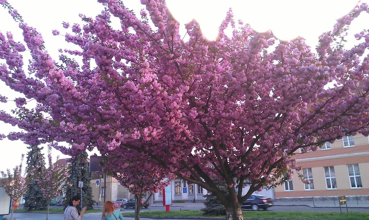 Весна... Пришел рассвет и миру улыбнулся... - Страница 6 XZstbxRwjoo