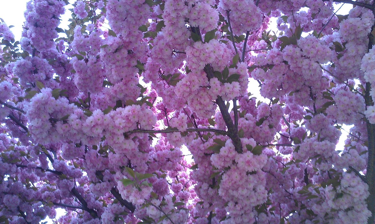 Весна... Пришел рассвет и миру улыбнулся... - Страница 6 B0mrGuxDtaw