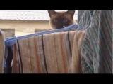 РЖАКА  Неудачный паркур кота!