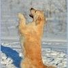 Питомник «ДЕМИАРТ РИА» 🐾 ретривер 🐾