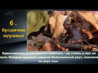 ТОП 10 Самые опасные насекомые планеты (1) клопы, осы, муравьи, тараканы,